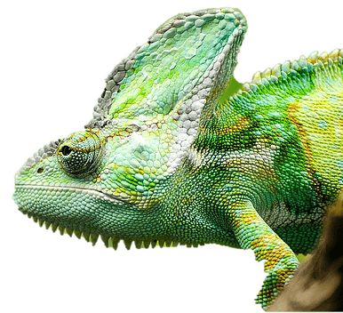 The Chameleon Guide - About page