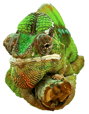 The Chameleon Guide - Business Troubleshooting